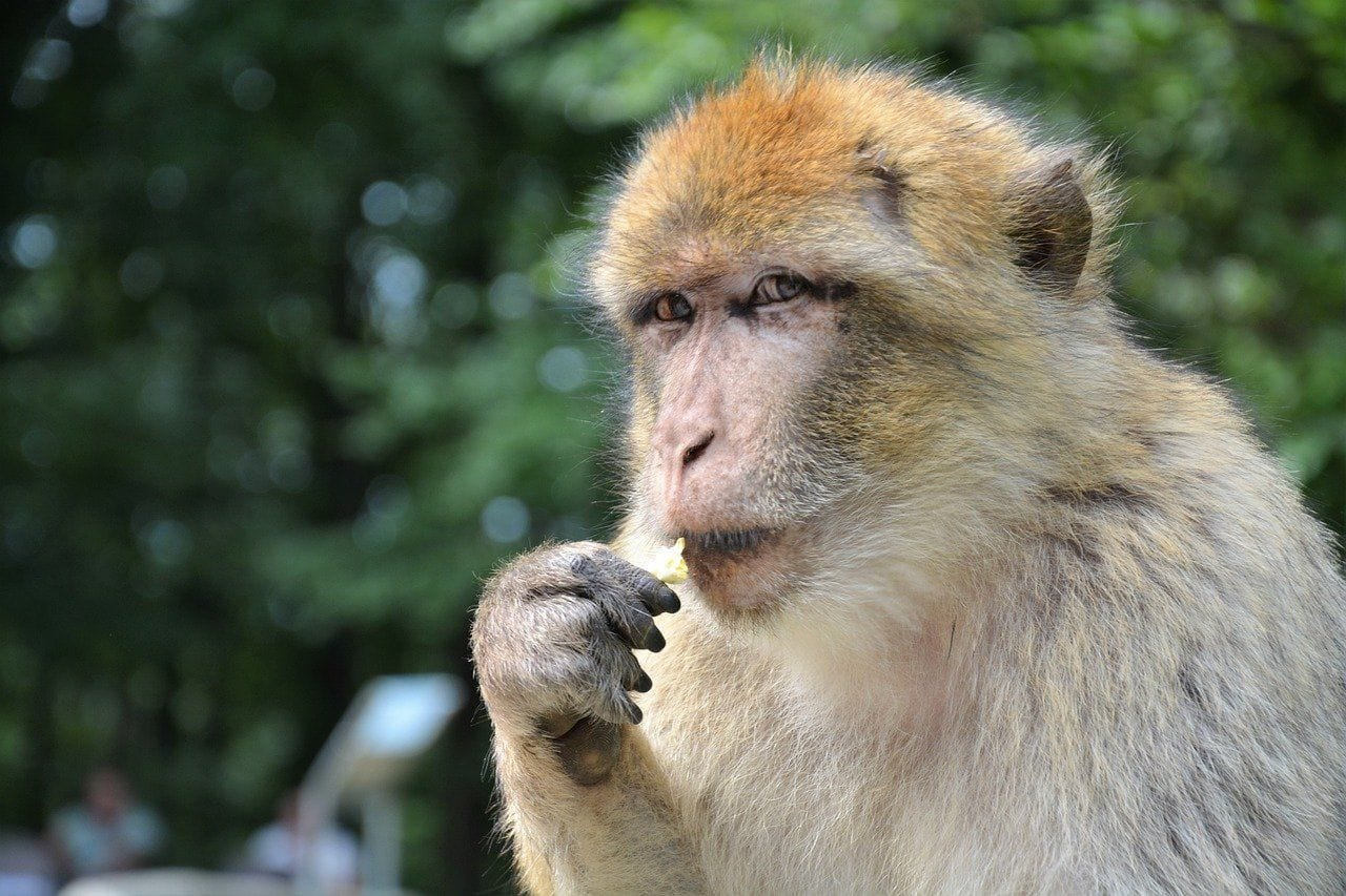 First human infection case with Monkey B virus dies in China: All you need to know