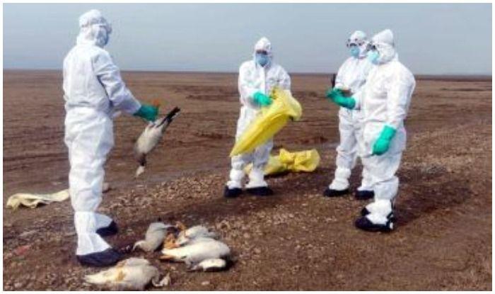 हिमाचल में भी Bird Flu की दस्तक, पौंग झील में पक्षियों की मौत के बाद  पर्यटकों की नो एंट्री, Poultry प्रोडक्ट की बिक्री पर रोक - Bird flu news  over migratory birds