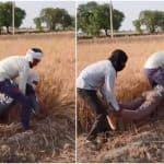 Viral Video: This Farmer's Desi Jugaad to Cut Wheat Will Make You Laugh Out Loud | Watch