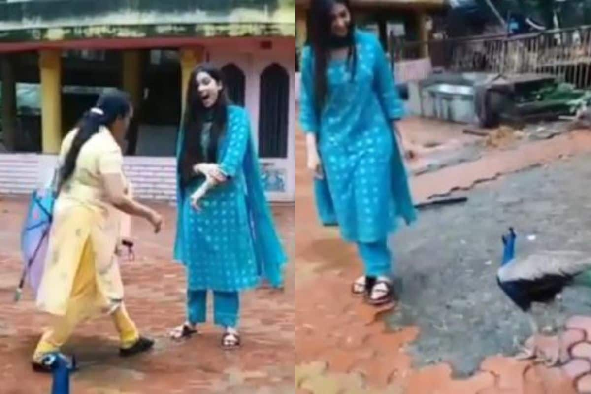 Bigg Boss Contestant Digangana Suryavanshi Attacked By Peacock, Fans Can