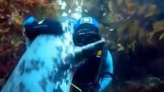Viral Video: Scuba Diver Gets Warm Hug from a Seal Under Water, Netizens Say, 'It's Pure Love'