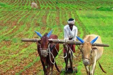 PM Kisan FPO Yojana: जानिए- क्या है FPO और इस योजना से कैसे मिलती है किसानों  को मदद? - Pm kisan fpo yojana fpo stands for what and how it helps to