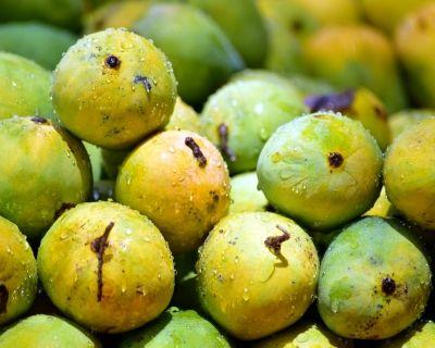 Mango malihabad 2