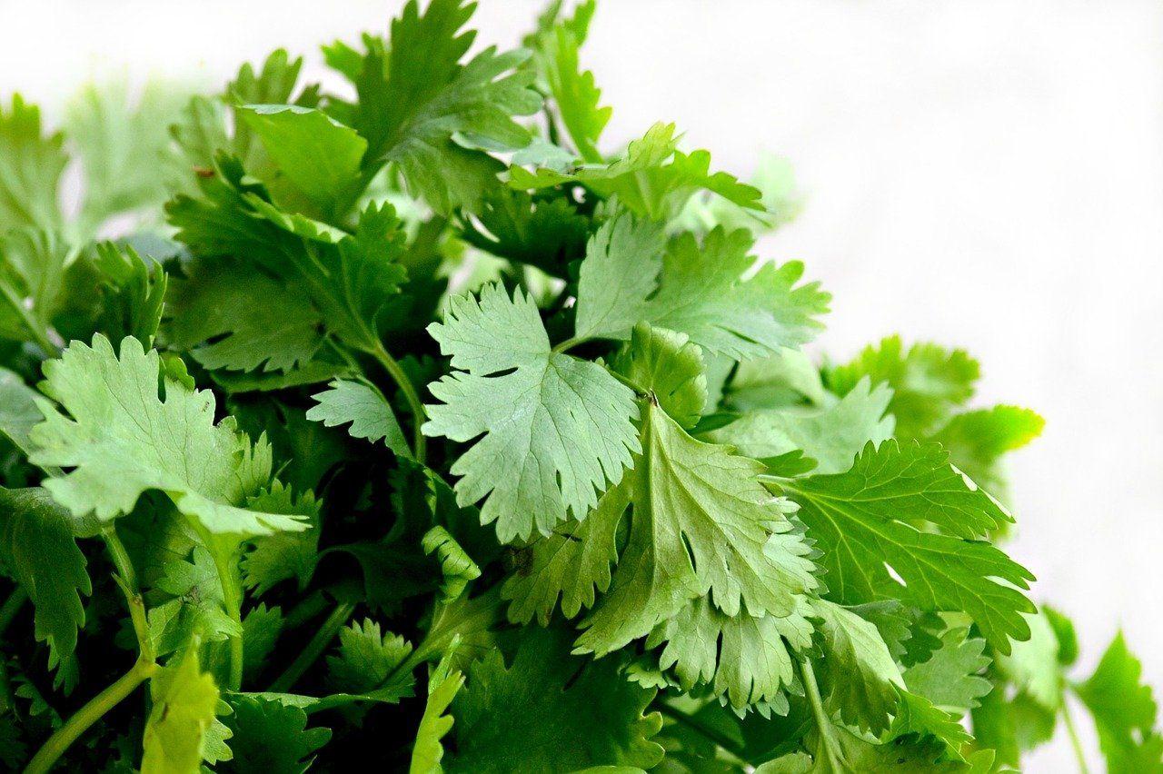7 Health Benefits of Eating Dhania And Pudina Chutney