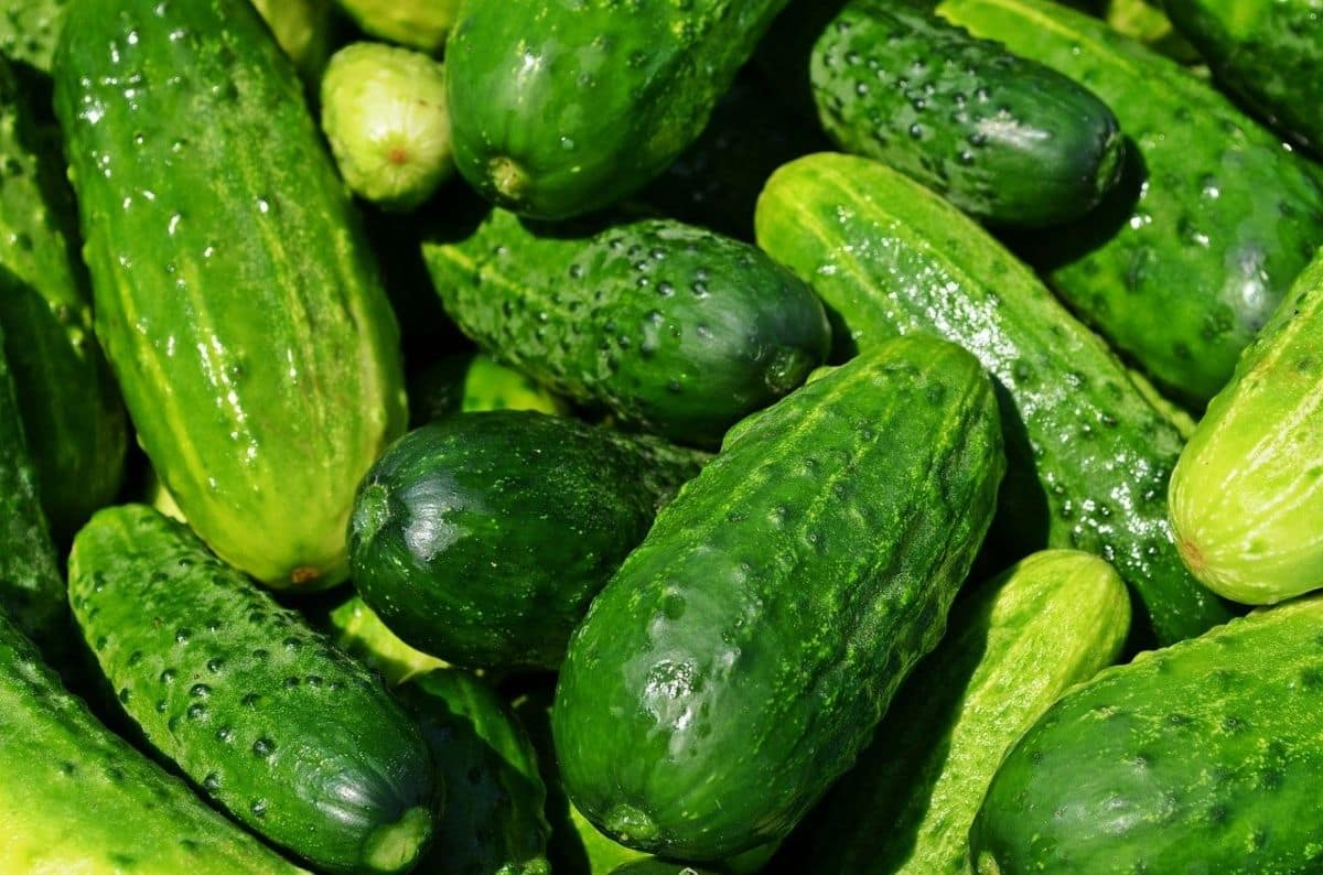 Five Foods That You MUST Have to Keep Yourself Going in Summer
