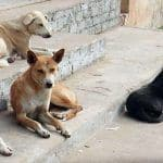 Outrage on Twitter After 300 Stray Dogs Killed With Poisonous Injections & Dumped in Pit in Andhra Pradesh