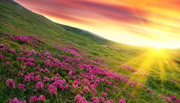 5 breathtaking flower valleys in India we bet you didn't know