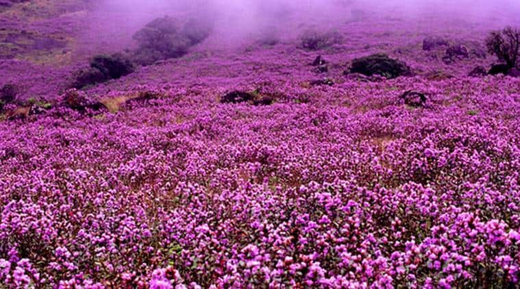 5 breathtaking flower-filled valleys in India we bet you didn't know