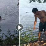Massive Alligator Attacks Swimmer & Bites His Arm, Video Leaves Twitter Horrified | Watch